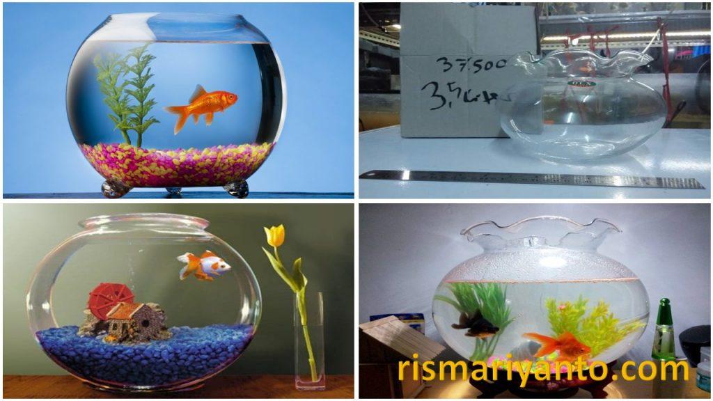Harga Aquarium Kecil Murah