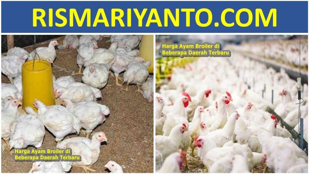 Harga Ayam Broiler di Beberapa Daerah Terbaru 2020