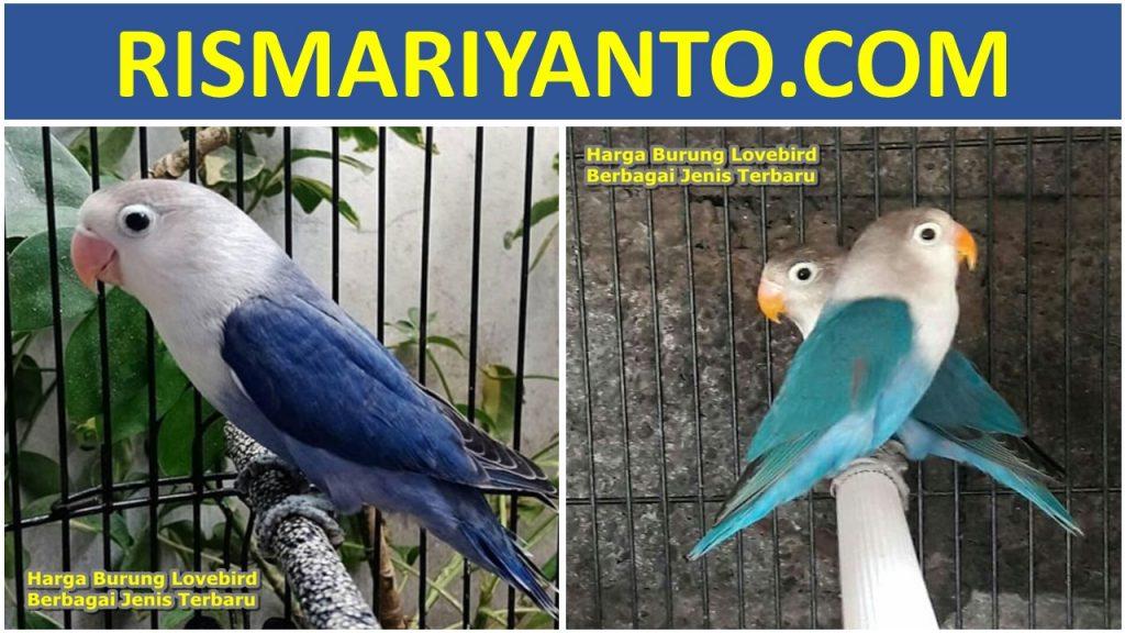 Harga Burung Lovebird Berbagai Jenis Terbaru 2020